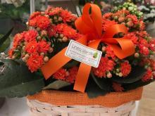 composizioni-fiori-treviso24.jpg