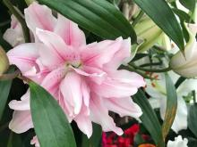 fiori-treviso21.jpg