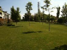 giardino-alberi.jpg